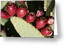Prickly Pear-jerome Arizona Greeting Card