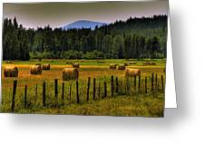 Priest Lake Hay Bales II Greeting Card