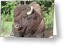 Prim And Proper Bison Greeting Card