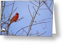 Primary Colours - Northern Cardinal - Cardinalis Cardinalis Greeting Card