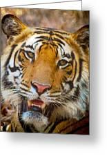 Prime Tiger Greeting Card