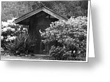 Primitive Nature Greeting Card