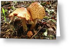 Prince Agaricus Mushroom Greeting Card