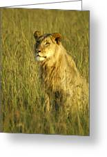 Princely Lion Greeting Card