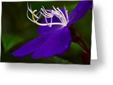 Princess Flower Flow Greeting Card