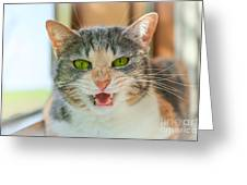 Priscilla A Cat Of My Mother Greeting Card