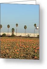 Prison Pumpkin Patch Greeting Card