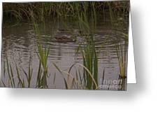 Private Duck Swimming Hole 1 Greeting Card