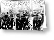 Private Duck Swimming Hole 1 In Black And White Greeting Card