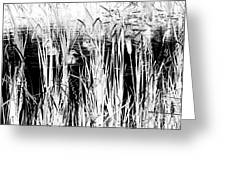 Private Duck Swimming Hole 2 In Black And White Greeting Card