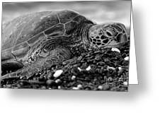 Profile Hawaiian Sea Turtle Bw Greeting Card