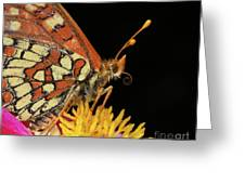 Profile Of A Butterfly Greeting Card
