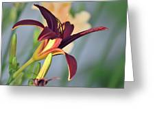 Profile Of A Day Lily Greeting Card