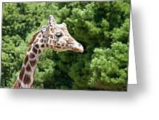 Profile Of A Giraffe Greeting Card