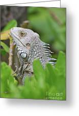 Profile Of A Gray Iguana Perched In A Bush Greeting Card