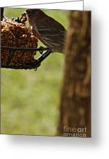 Profile Of A Male House Finch Greeting Card