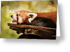 Profile Of A Red Panda Greeting Card
