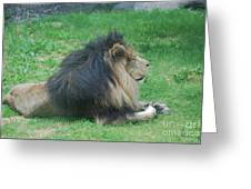 Profile Of A Sleeping Lion In Grass Greeting Card