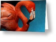 Profile Of An American Flamingo Greeting Card