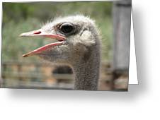 Profile Of An Ostrich Greeting Card