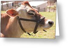 Profile Of Brown Cow Greeting Card