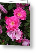 Profusion Of Pink Greeting Card
