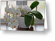 Profusion Of White Orchid Flowers Greeting Card