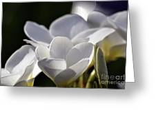 Promises In White Greeting Card