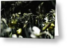 Promises Of Spring. Greeting Card