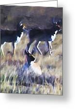 Pronghorn 4 Greeting Card