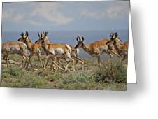 Pronghorn Antelope Running Greeting Card