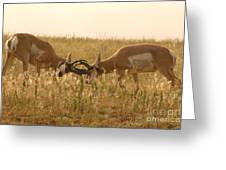 Pronghorn Antelope Sparring In Autumn Field Greeting Card