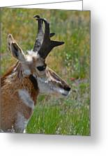 Pronghorn Buck Profile Greeting Card by Karon Melillo DeVega