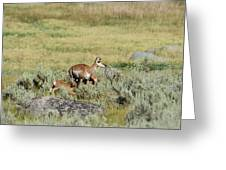 Pronghorn Doe With Her Twins Greeting Card