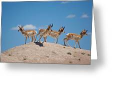 Pronghorn Scatter Greeting Card