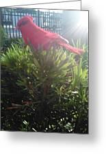 Prop Cardinal #2 Greeting Card