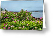 Prospect Harboa Roses Greeting Card
