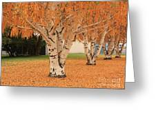 Prosser - Autumn Birch Trees Greeting Card