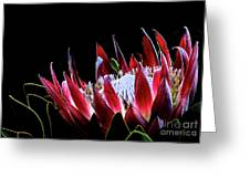 Protea 1 Greeting Card