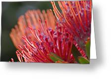 Protea 5 Greeting Card
