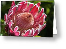 Protea Bloom Greeting Card
