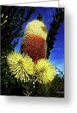 Protea Flower 5 Greeting Card