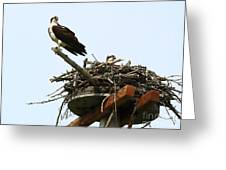 Protecting The Nest Greeting Card