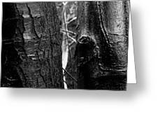 Protection Of The Wood Greeting Card