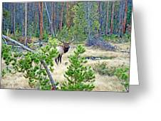 Protective Elk Greeting Card