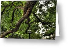Protective Oak Greeting Card