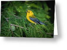 Prothonatory Warbler 9809 Greeting Card