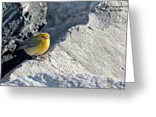 Prothonotary Warbler Greeting Card