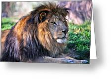 Proud Lion Greeting Card