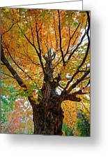 Proud Maine Tree In The Fall Greeting Card